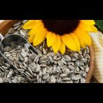 Sončnična semena